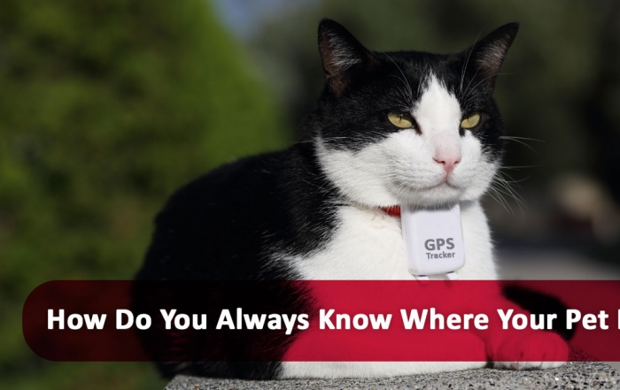 How do you always know where your pet is?